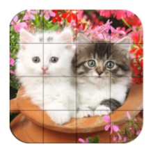 Kittens – Puzzle